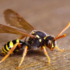 Insect Pest Control in Sunderland from Northern Pest Solutions
