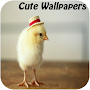 Cute Wallpapers APK icon
