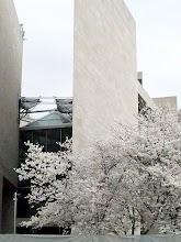 Photo: Cherry blossoms photographed in front of the East Building of the National Gallery of Art on the first Sunday of the annual festival.