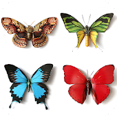 Butterfly Memory Game For Adults And Kids Free