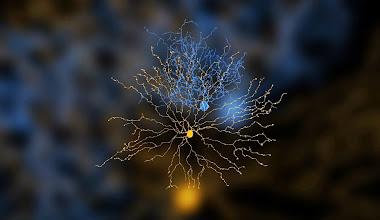 Photo: Credit: Alex Norton, EyeWire, MIT http://eyewire.org/