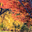 Landscapes at Fall by Diane Ebert - Uncategorized All Uncategorized ( #candids.are.my.passion, #falltextures, #landscapes,  )