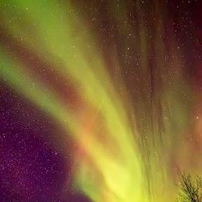 Aurora in Alaska (Compact Camera) by Justin Ng - Landscapes Starscapes ( lumix gx1, alaska, aurora, northern lights, justin ng )