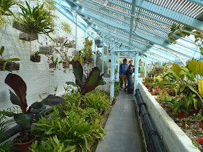 Photo: The greenhouse of Darwin, with carnivorous plants