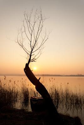 L'albero spoglio di edo.vigoni