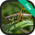 Crickets Sounds and Ringtones icon
