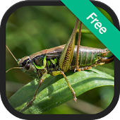 Crickets Sounds and Ringtones