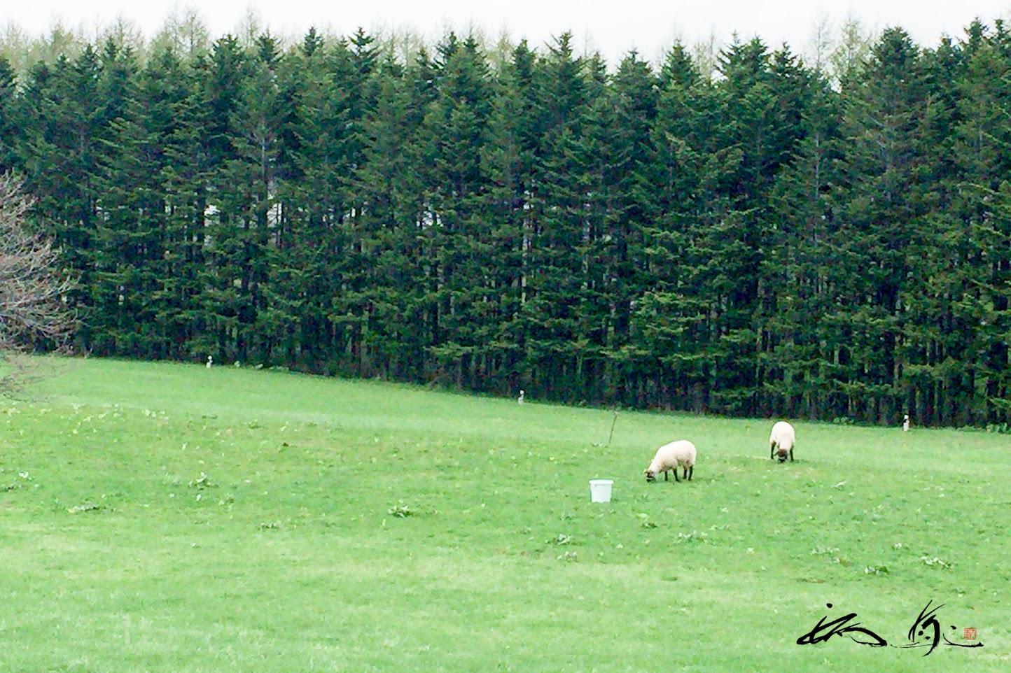 羊戯れる丘の上のレストラン