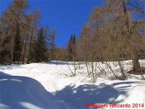 Photo: Ric_IMG_2950 si cerca di tagliare il piu possibile nel bosco