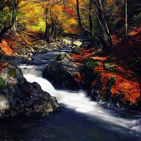 The Enchanted River 2 by Malinov Photography - Landscapes Forests ( nature, waterscape, autumn, colors, fall, forest, blur, flow, motion, river )