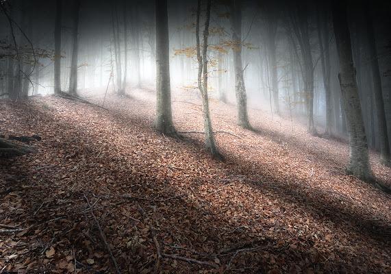 Prime luci in autunno di Marco Tomei
