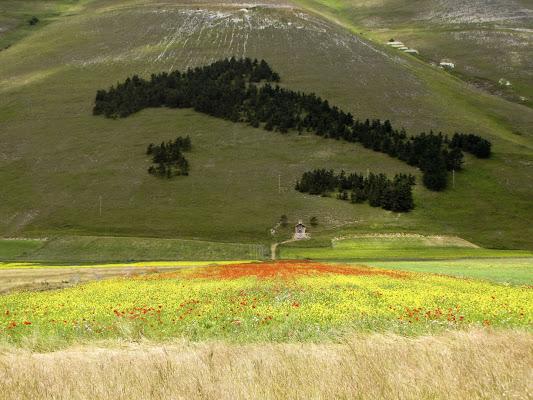 Fioritura a Castelluccio di Norcia di leorol