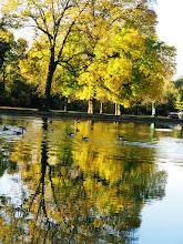 Photo: Geese swimming in the golden autumn reflection at Eastwood Park in Dayton, Ohio.