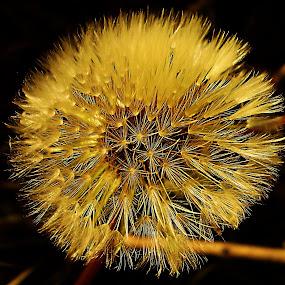 by Marijana Gašpić - Nature Up Close Flowers - 2011-2013