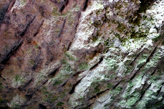 Photo: Számos helyen látható a kézi fejtés bányászcsákány (laposabb) , ill. a bányászék (kúposabb) vésedelem nyoma.