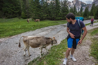Photo: Cow checking out Daniele in Malga Foresta on Trail 19 in Valle di Braies, Dolomiti, Italy | http://blog.kait.us/2014/06/hiking-dolomites.html