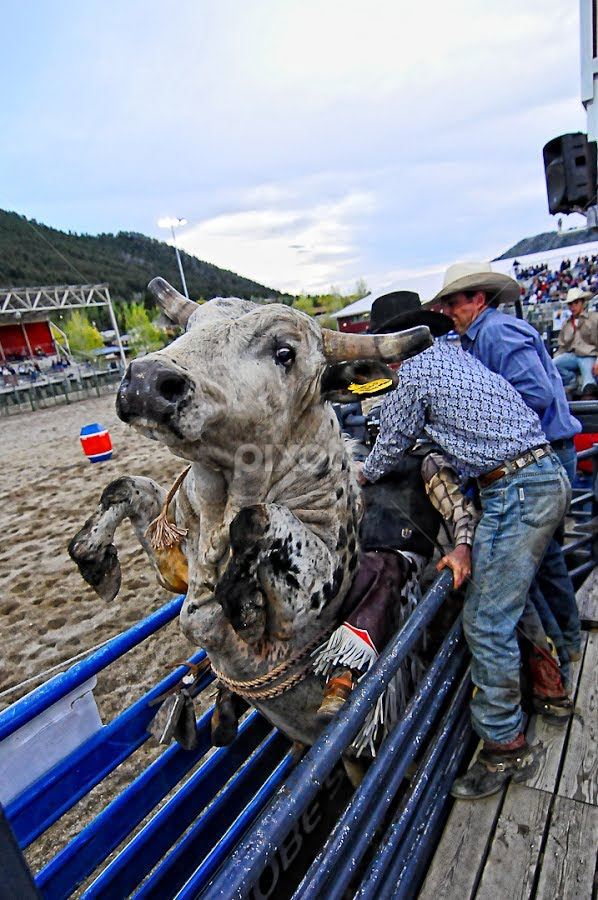 Jackson Hole,Wyoming by Benoit Beauchamp - Sports & Fitness Rodeo/Bull Riding