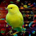 صوت الكناري أجمل طائر icon