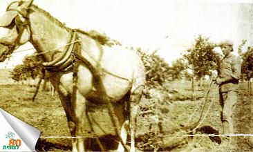 Photo: שלמה קוסובר חורש עם מחרשה רתומה לסוס