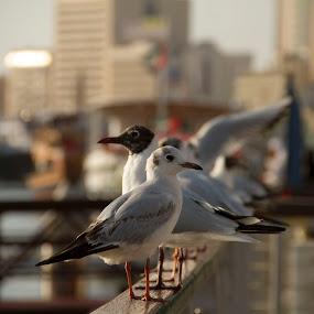 by Allan Caragao - Animals Birds (  )