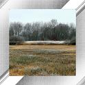 Swamp Photo Frames icon