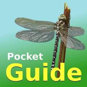 Pocket Guide UK Dragonflies