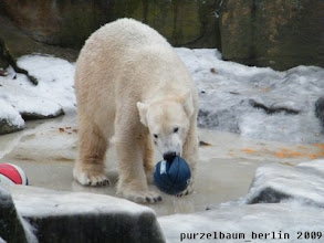 Photo: Inspektion beendet - jetzt wird wieder Ball gespielt ;-)