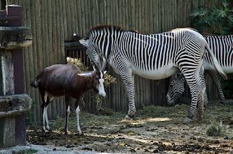 Photo: V park sva se seveda, kot se za safari parke spodobi, zapeljala z avtom. Med živalmi, kot so recimo žirafe, nosorogi, levi in vsemi ostalimi, na naslednjih slikah, se enostavno vozite z avtom. Seveda morate šipe imeti za vsak slučaj zaprte.