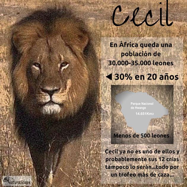 En memoria de Cecil