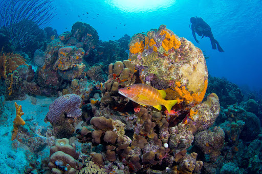 bonaire-coral-reef.jpg - A scuba diver approaches a coral reef in Bonaire.