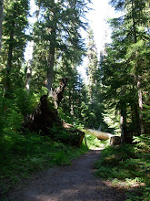 Photo: Hackleman Old Growth Trail