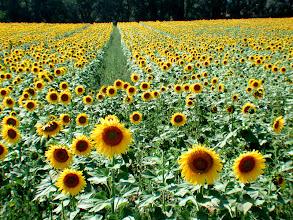 Foto: Frankreich (France), Provence, 2001, © Eckhard Supp