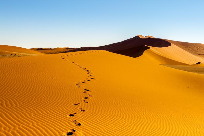 Verso la cima... della duna. di domenicorigon