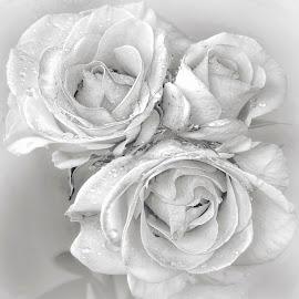 by Manuela Dedić - Black & White Flowers & Plants