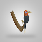Vannya - Your Digital Bird Guide 1.2