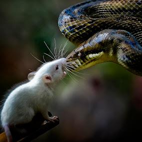 Final Round by Pimpin Nagawan - Animals Reptiles