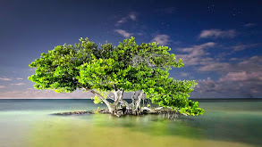 Everglades thumbnail
