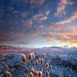 All that you Need is in Your Soul by Phil Koch - Landscapes Prairies, Meadows & Fields ( trending, country, shadow, rural, office, scenic, hope, meado  w, canon, beautiful, pastel, frost, weather, season, sky, emotions, natural, inspired, heaven, morning, field, light, peace, shadows, dawn, photography, love, sunrise, mood, vertical, endless, cold, clouds, sun, twilight, life, colors, unity, joy, lines, popular, arts, meadow, wisconsin, art, living, green, nature, inspirational, dramatic, portrait, horizons, e  nvironment, horizon, f  ineart, sunlight, outdoors, blue, sunset, earth, serene, landscape )