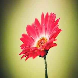 flores bonitos - náhled