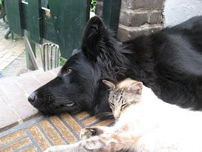 Photo: Hoe schattig, samen genieten van de warmte.