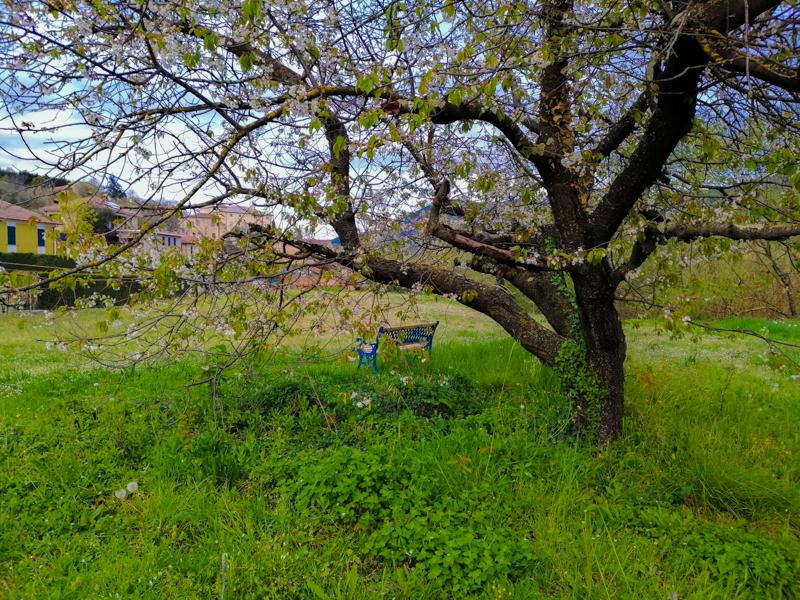 la primavera arriverà?!? di luana_sasso
