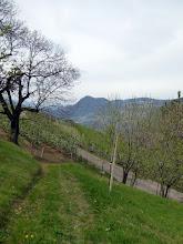 Photo: Alte und junge Kastanien. Der Zugangsweg ist neu.