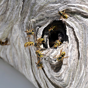 There Won't Be Bees in the Morning by Jim Greene - Nature Up Close Hives & Nests ( hive, bees, nature, nest, hornets )