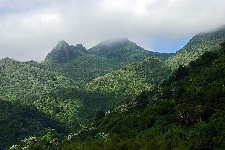 El Yunque National Forest, a tropical rain forest managed by the USDA - Forest Service.