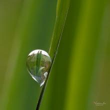 Photo: Small world