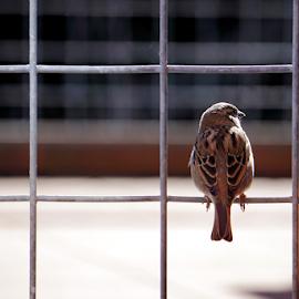 Finch  by Todd Reynolds - Animals Birds