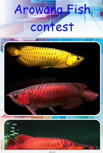 Download Arowana Fish Contest Free