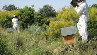 La apicultura es una actividad fundamental para el desarrollo rural en Andalucía.