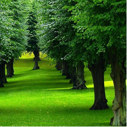 ツリー画像と背景 娛樂 App LOGO-APP試玩