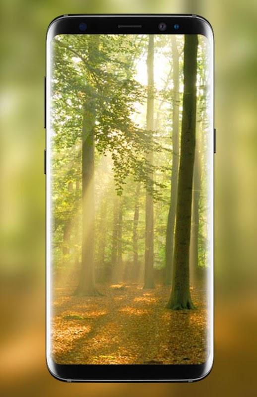 Download 920 Background Biru Hutan HD Gratis